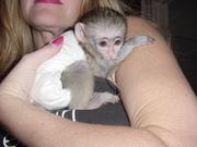 обезьяна для принятия
